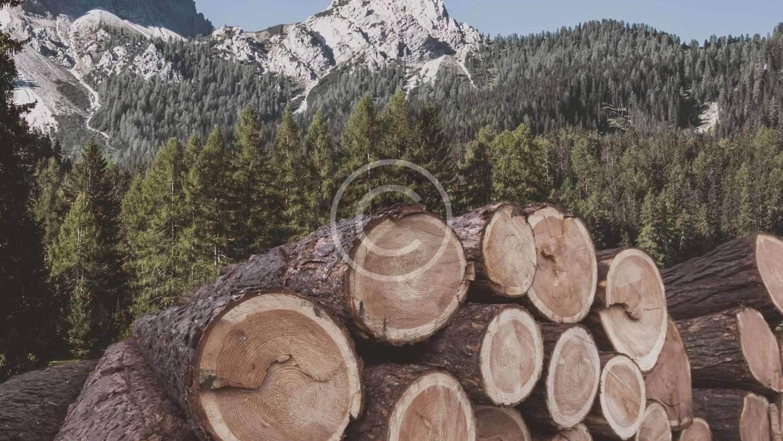 Acquisto di legname